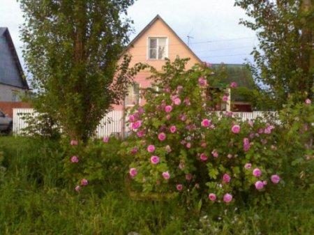 Пейзажи г. Чаплыгин   Липецкой области